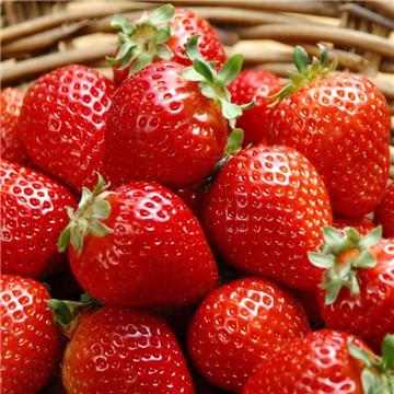 什么水果养胃