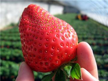糖尿病放心吃六种水果