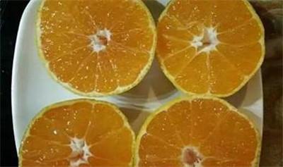 孕妇能吃橘子吗