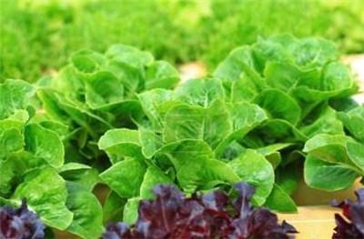 水培蔬菜营养液配方