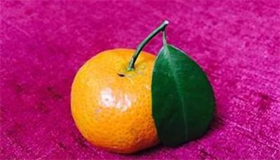 橘子的营养价值