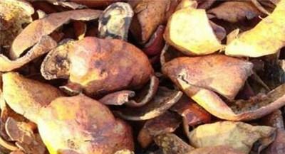 石榴皮的功效与作用