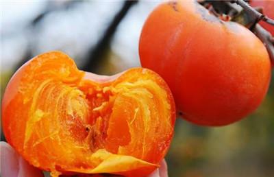 吃完柿子不能吃什么